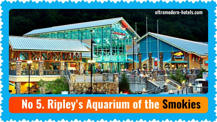 The best aquariums in the United States: Top 10 Must-See